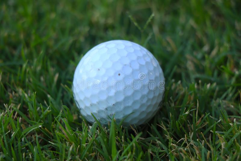 Closeup Golf ball on grass. stock photos