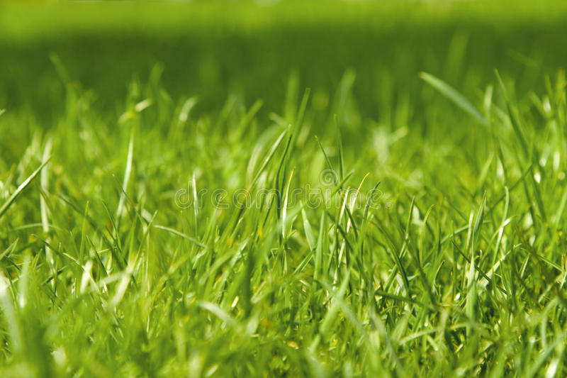 Closeup of green grass royalty free stock photos