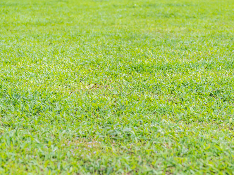 Closeup of green grass background stock photos