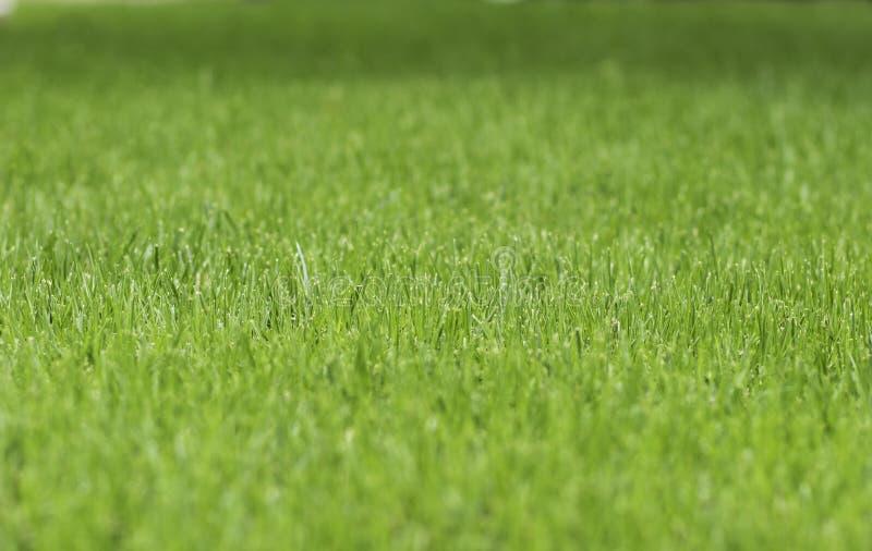 Closeup of green grass lawn royalty free stock photo