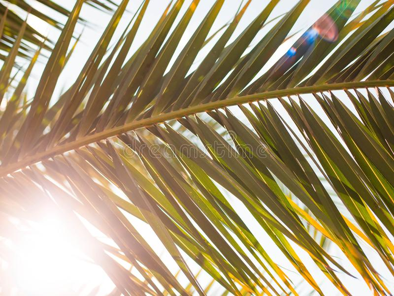 Closeup on green palm leaves border isolated on sky background, fresh exotic tree foliage, paradise beach, summer stock photo