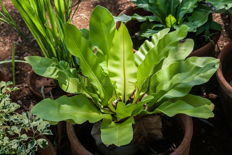 Closeup of green plant with large leaves royalty free stock photography