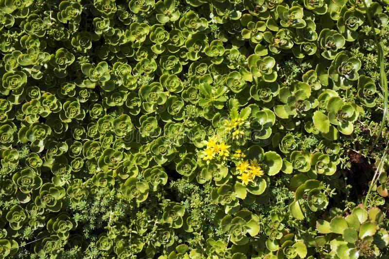 Closeup Green stock image