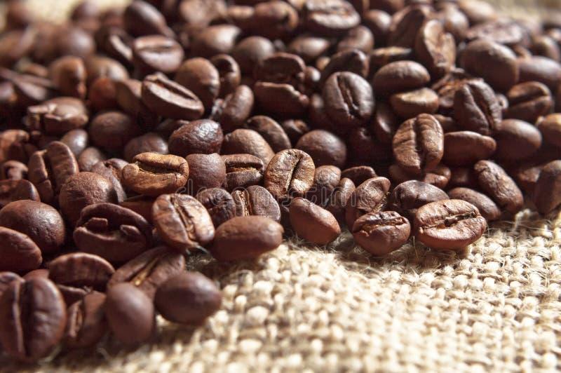 Grillade kaffebönor arkivbild