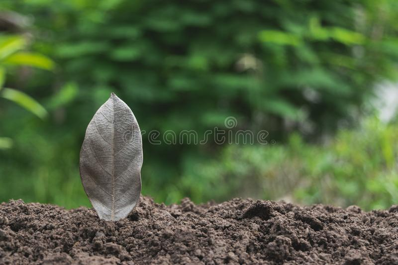 Download Closeup Hand Of Person Holding Abundance Soil For Agriculture Or Stock Photo - Image of background, garden: 118077296