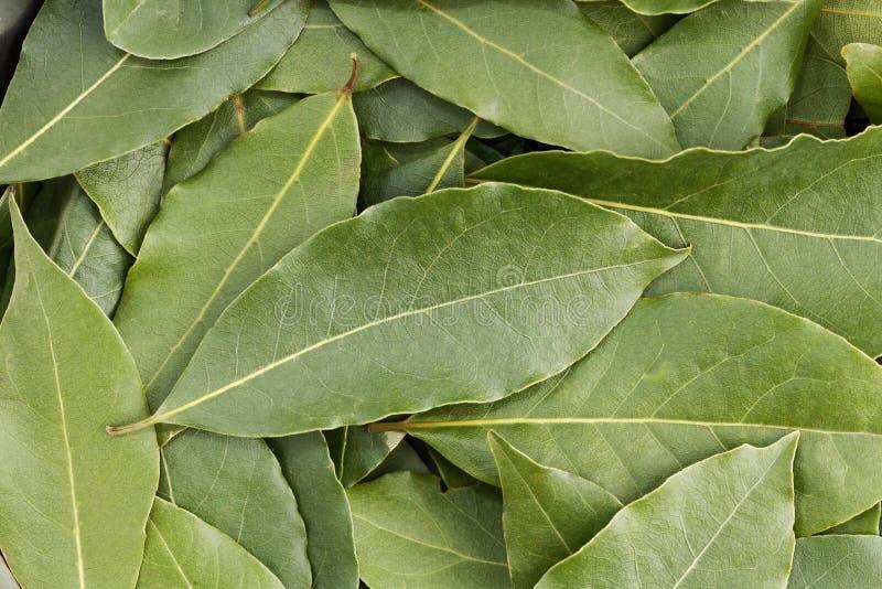 Closeup heap de feuilles de lauriers vertes images libres de droits
