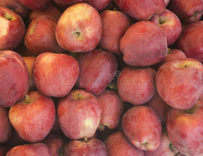 Closeup heap sweet fresh ripe red apples. Fruit backround. Healthy food. Fall harvest. stock image