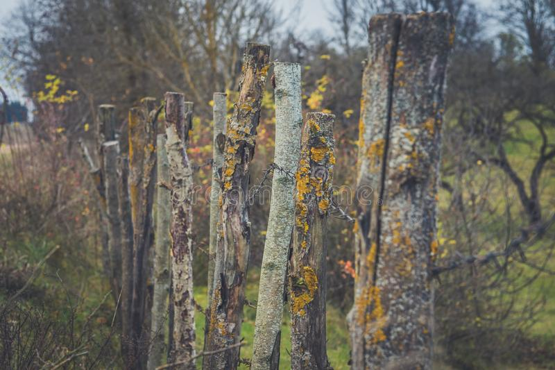 Closeup high old wooden fence of logs in form of palisade vanish into space in countryland.  stock images