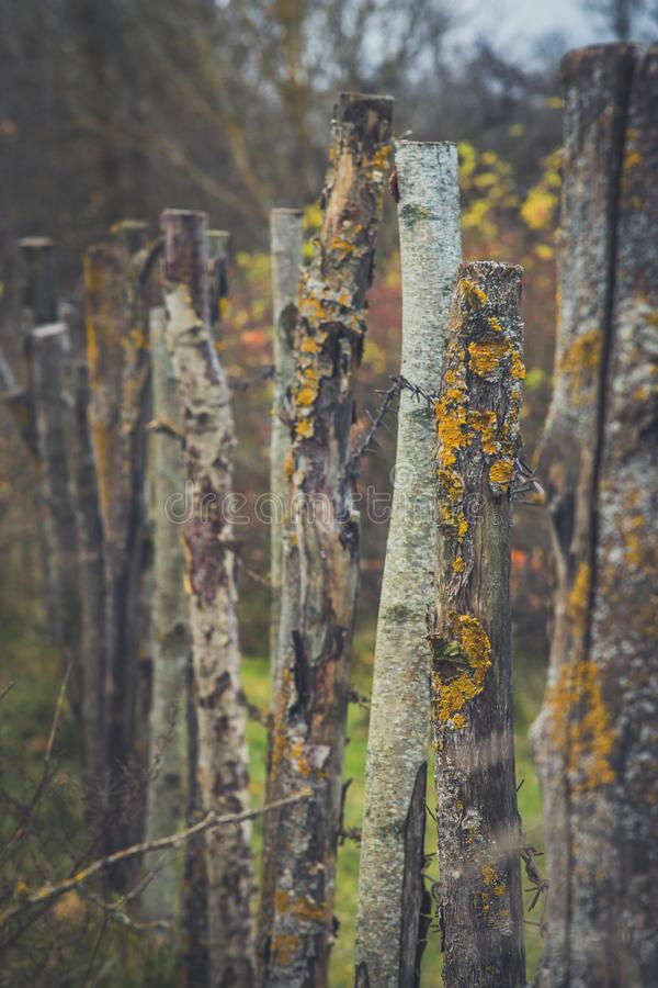 Closeup high old wooden fence of logs in form of palisade vanish into space in countryland.  stock image