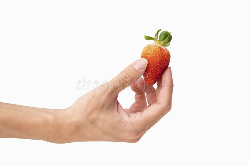 closeup of holding one fresh strawberry in hand with white background stock image