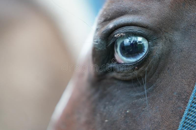 Closeup of an horse-eye with blurred background in the Dominican Republic stock image