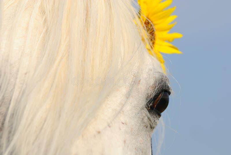Closeup of horse s eye