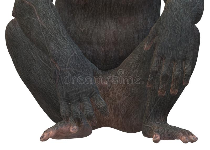 A closeup illustration on the lower torso of a primate monkey against a white backdrop stock image