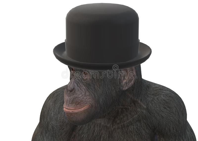A closeup illustration of a primate monkey wearing a black bowler hat cap stock photo