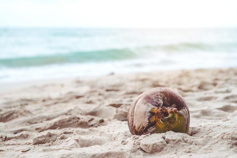 Closeup image of a coconut on the beach stock images