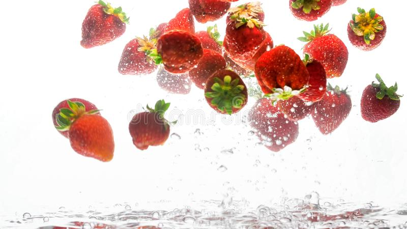Closeup photo of lots of fresh ripe strawberries floating in clear water with air bubbles against white background royalty free stock photos