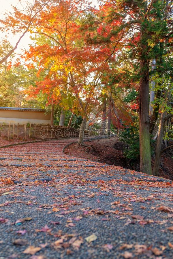 The path with red and yellow tree leaves cover in autumn. Closeup image of the path with red and yellow tree leaves cover in autumn royalty free stock photography
