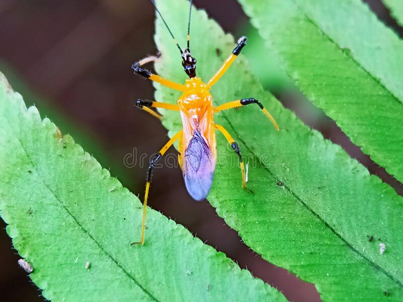 CloseUp of insect on leaf stock photos