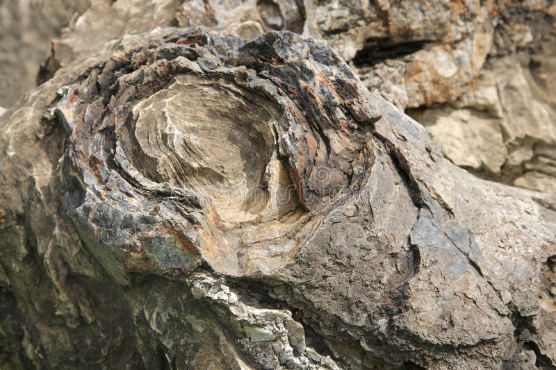 Closeup of the layers in Stromatolite, Salkhan royalty free stock photo