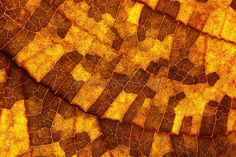 Closeup Of A Leaf Royalty Free Stock Photos