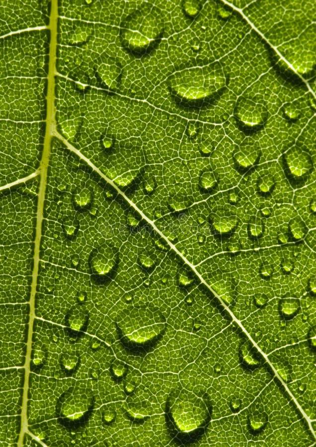 Download Closeup leaf stock image. Image of greens, fibers, construction - 2006273