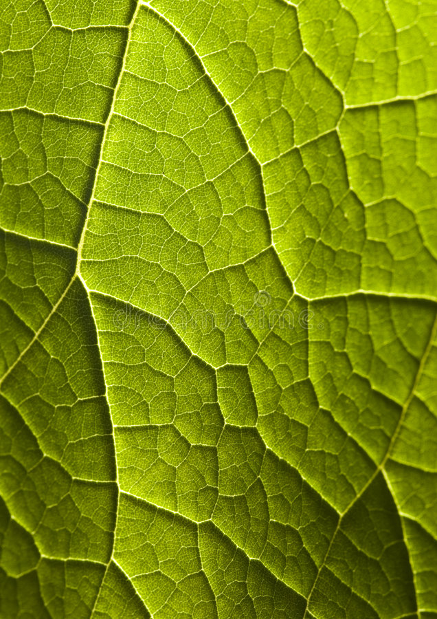 Download Closeup leaf stock image. Image of blade, fibbers, light - 2006343