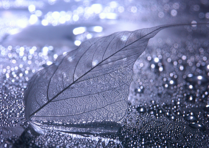 Download Closeup leaf stock photo. Image of greens, frame, fibers - 2328004