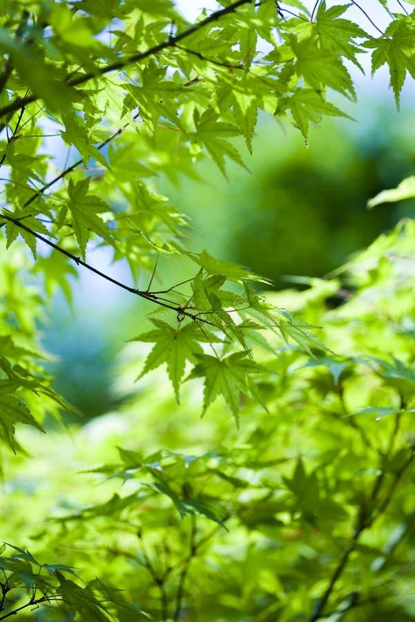 Closeup leaf royalty free stock image