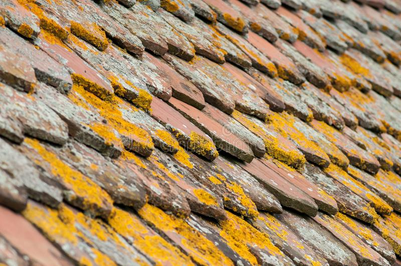 Lichen on terra cotta tiles on roof. Closeup of lichen on terra cotta tiles on roof stock image