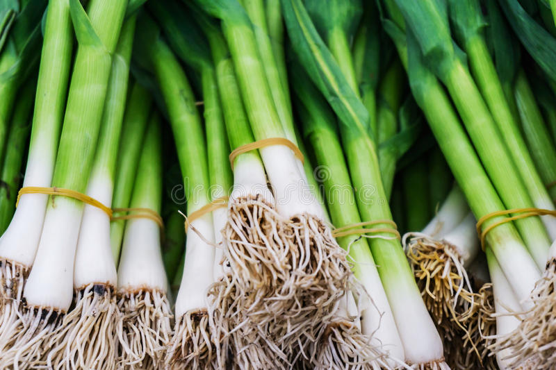 Closeup links fresh, organic green garlic produced without nitr. Closeup links, fresh, organic green garlic produced without nitrates in the market for fruit and royalty free stock images