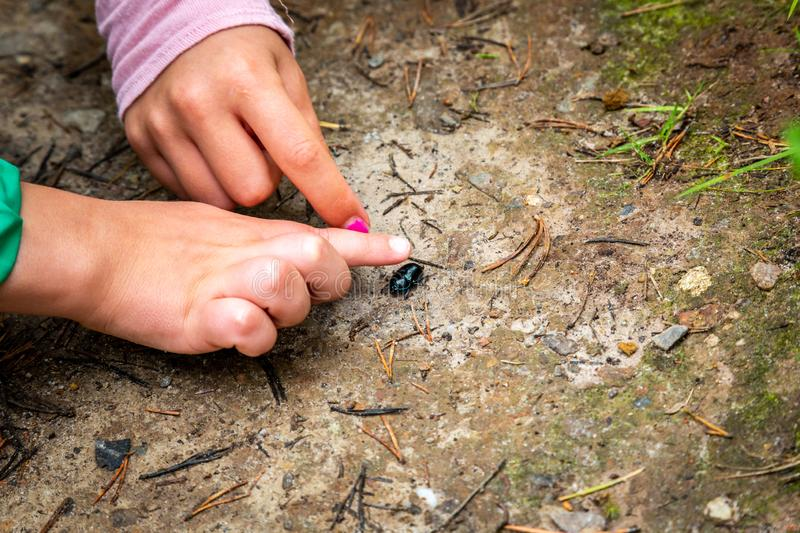 Closeup of little children boy and girl hands at forest ground, exploring and learning about nature and insects. Pointing and touching a black bug stock photos