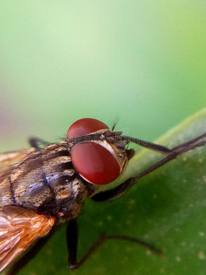 Closeup look on a fly stock photography