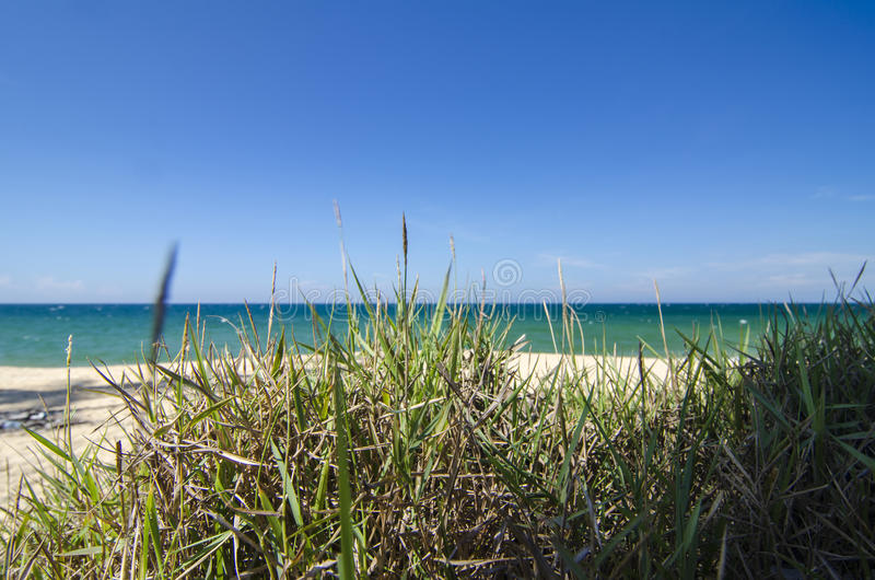Closeup and low level shot, green grass over tropical sandy beach background at sunny day. Blue sky and torquise sea water stock image