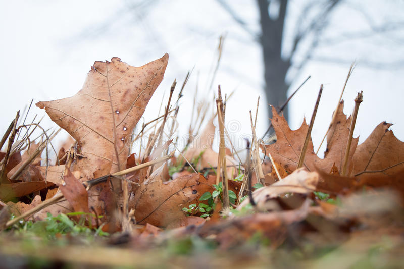 Closeup low-level shot of leaves and grass. Ground level shot of dead leaves on a meadow floor with blurred trees in the background royalty free stock photos