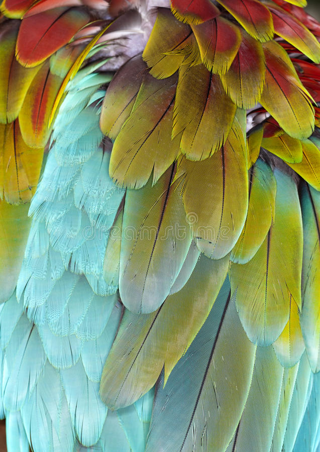 Closeup of Macaw Feathers (background). Closeup of a colorful feathers on the back of a macaw. Background texture, color and pattern stock images