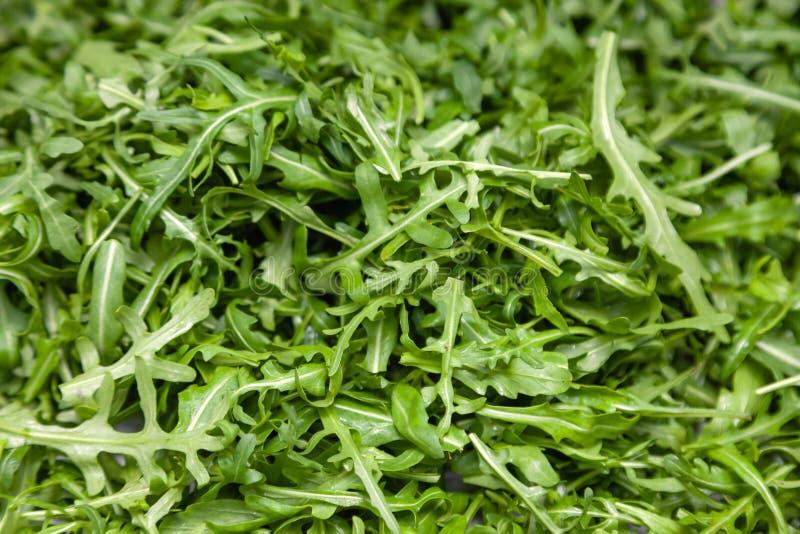 Closeup macro fresh green selected leaves of arugula herb. Concept diet, vegetarian, natural, low-calorie meal royalty free stock image