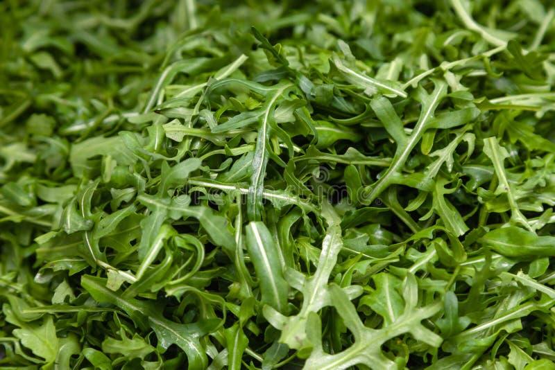 Closeup macro fresh green selected leaves of arugula herb. Concept diet, vegetarian, natural, low-calorie meal stock image