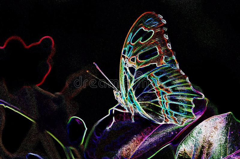 Closeup of Malachite butterfly with glowing edges stock photography