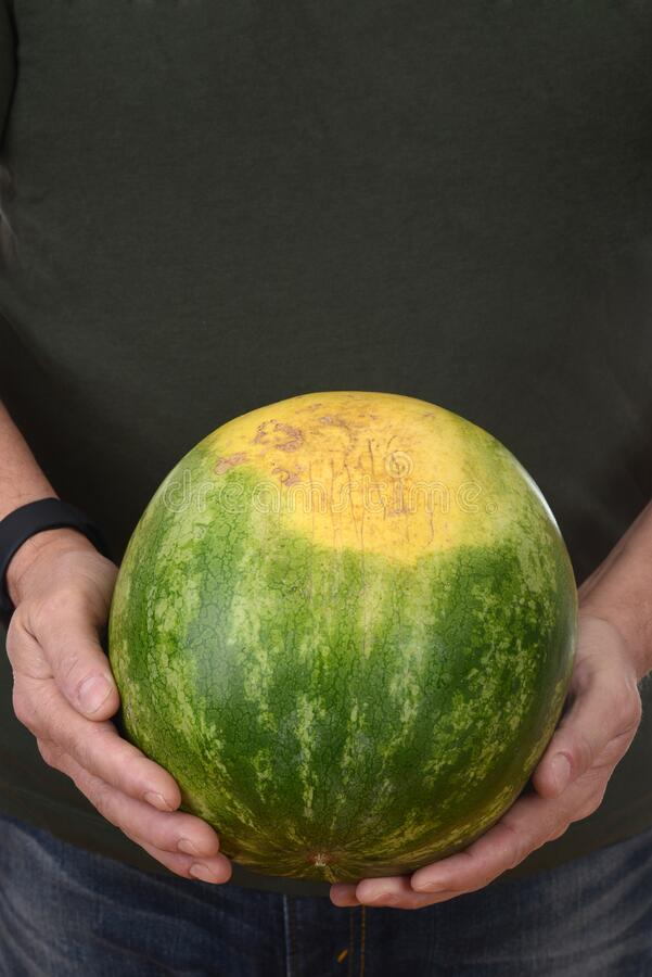 Man holding fresh picked watermelon royalty free stock photography