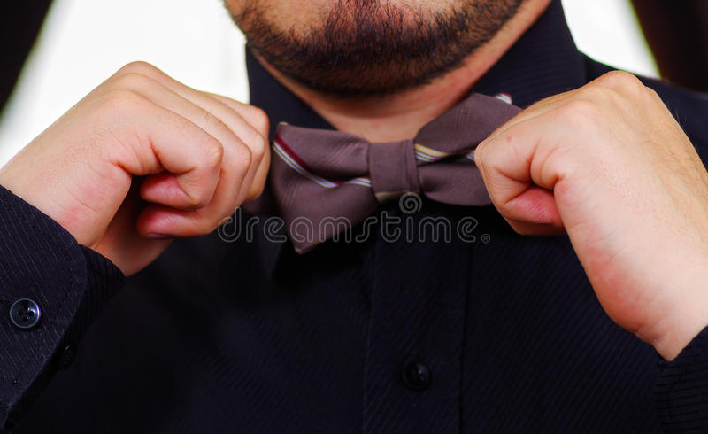 Closeup man's chest wearing white shirt, tying bowtie using hands, face partly visible, men getting dressed concept royalty free stock images