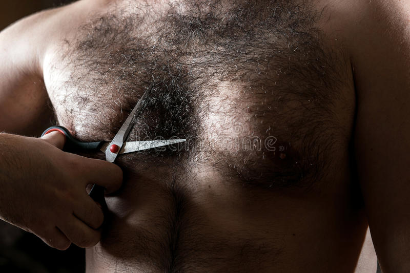 Closeup man with scissors cuts the hair on his hairy chest.  stock photography