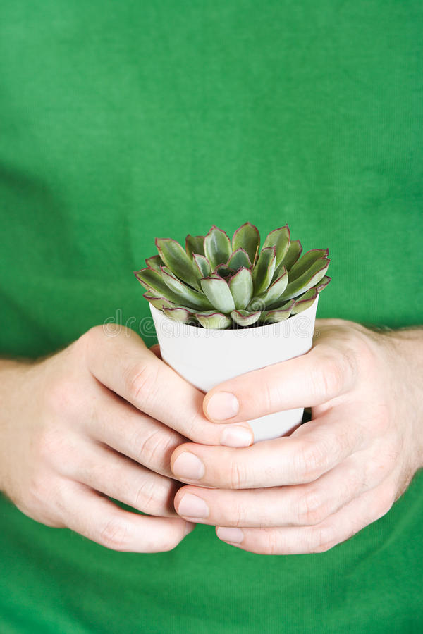 Closeup of mans hands holding potted plant stock photography