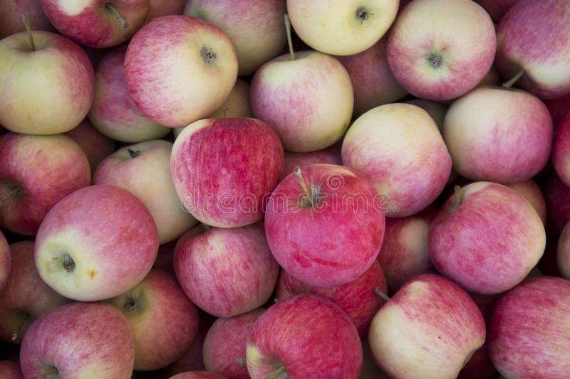 Closeup of many lower grade red apples on the shelf display stand for sale in select local grocery store for background. Imperfect royalty free stock photos