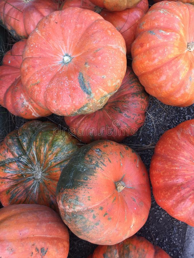 Orange pumpkins with discoloration royalty free stock photography