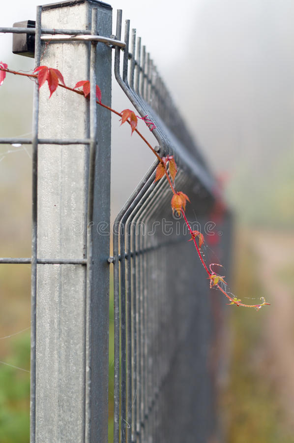 Closeup on metal rod fence with climbing plants stock photography