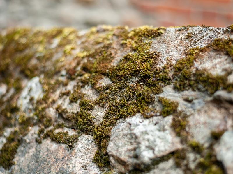Closeup of moss growing on a stone wall stock image