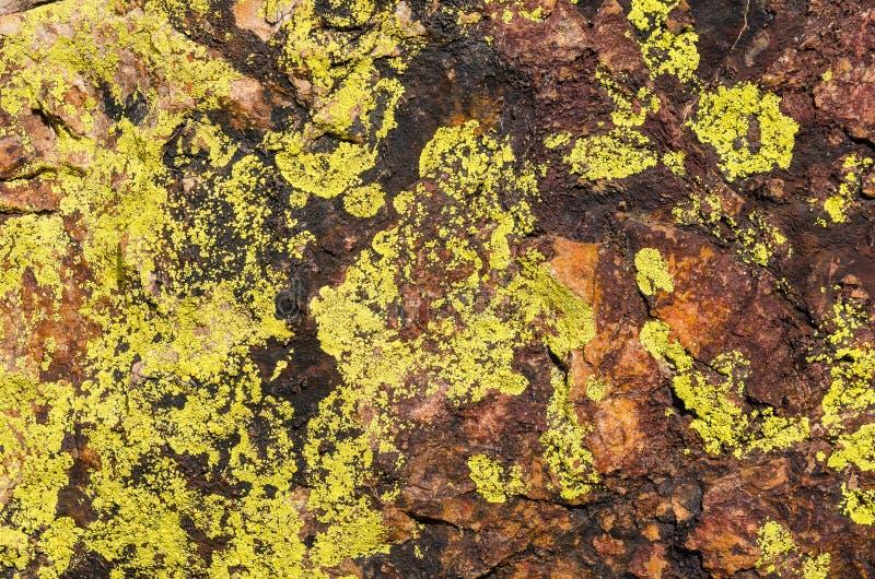 Closeup moss rock texture. stock photo