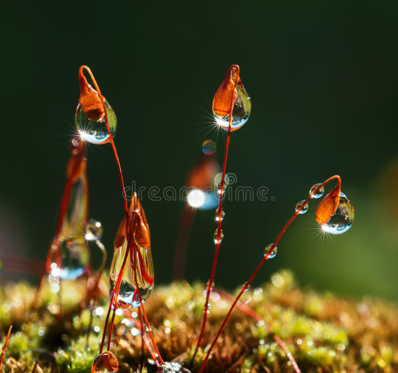 Closeup moss with Sun beams in forest royalty free stock images