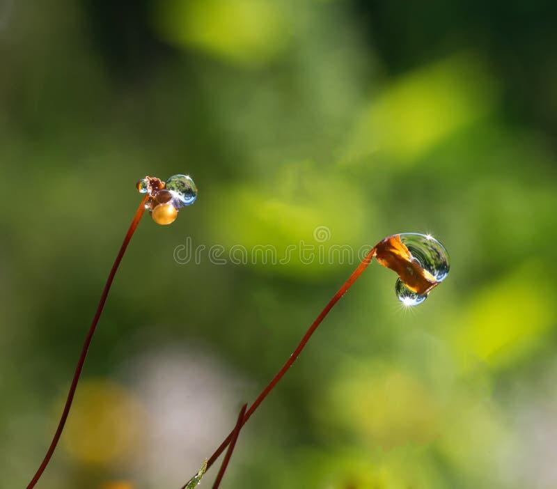 Closeup moss with Sun beams stock photos