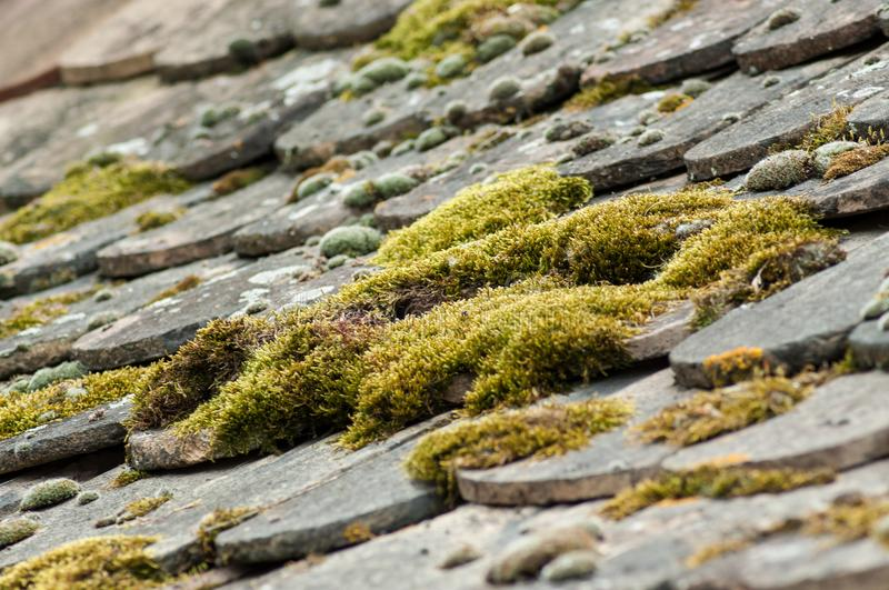 Moss on terra cotta tiles on roof. Closeup of moss on terra cotta tiles on roof royalty free stock images